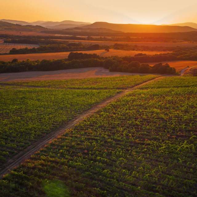 """""""A Beautiful Sunset over vineyard in Europe"""" stock image"""