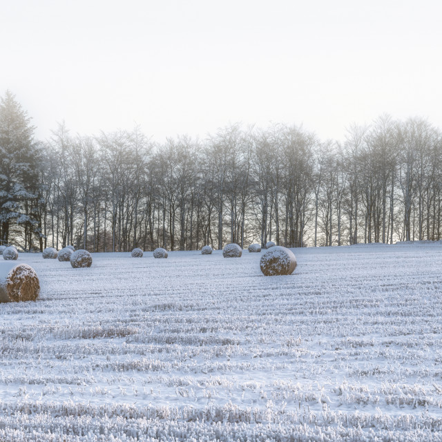 """Winter Wonderland in Central Scotland"" stock image"