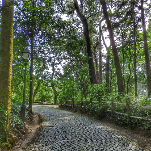 """Passage inside the forest in Sintra Portugal"" stock image"