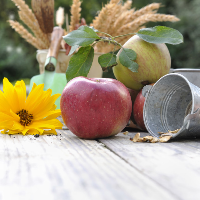 """apple and flower"" stock image"
