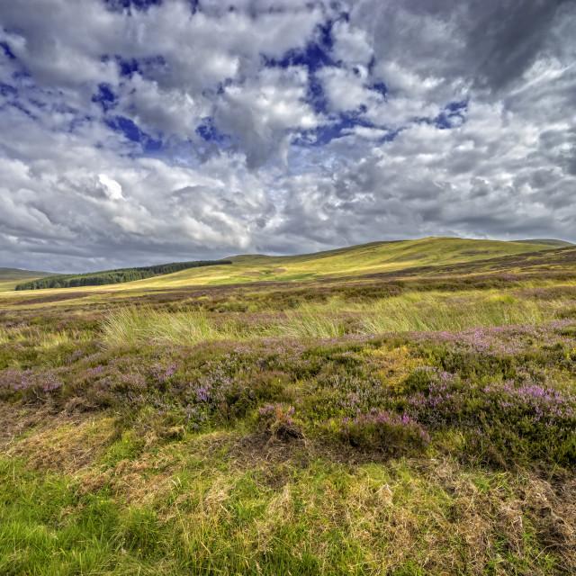 """Ochil Hills Scenery"" stock image"