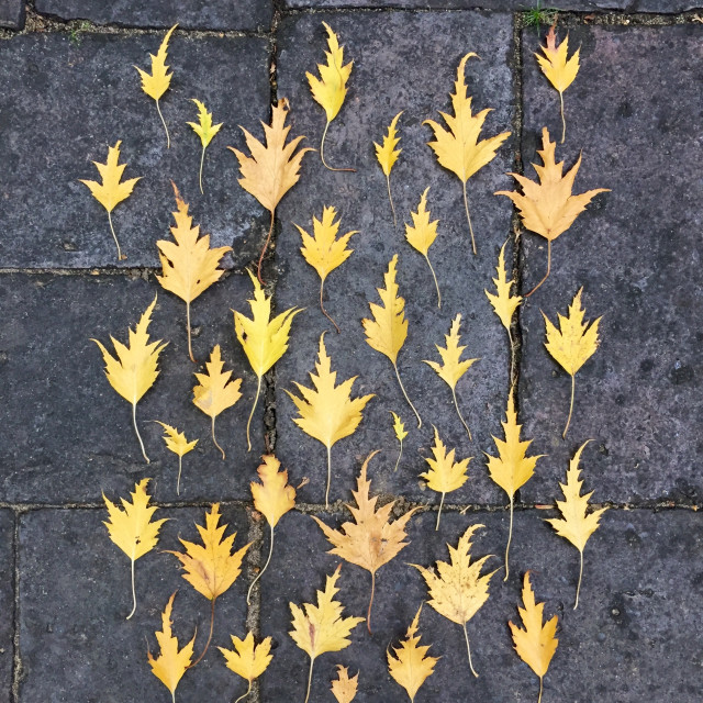 """""""Autumn leaves arranged on the ground."""" stock image"""