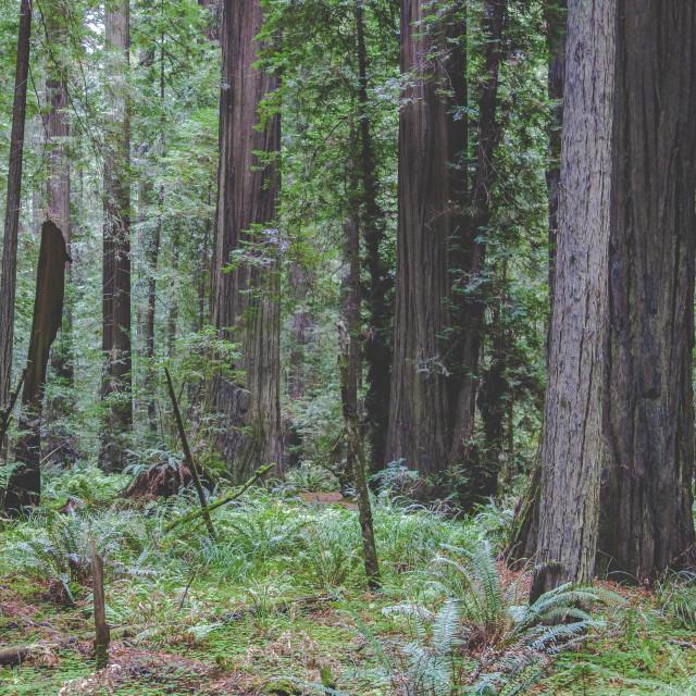 """Humboldt Forest Floor"" stock image"