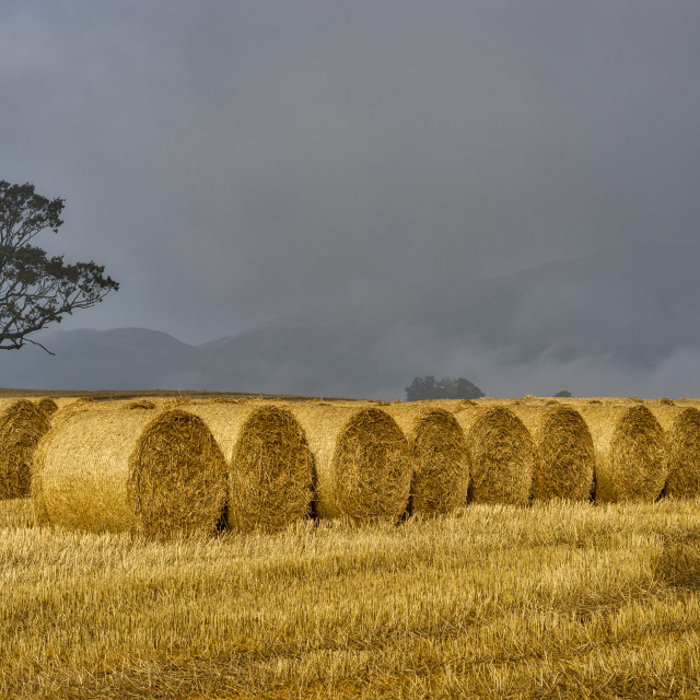 """Farming scenery in Central Scotland"" stock image"