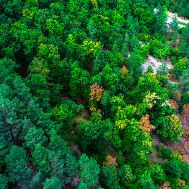 """""""Aerial view of green pine trees in forest in high mountains land"""" stock image"""