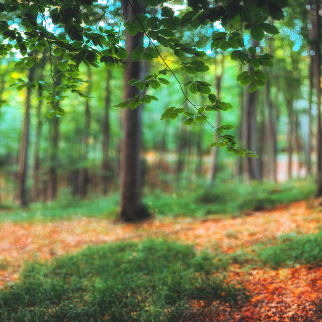 """""""Panorama of green mountain forest"""" stock image"""