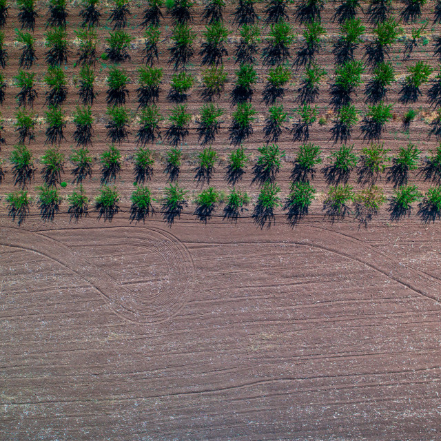 """""""Aerial view of autumn agricultural field and rows of green small"""" stock image"""