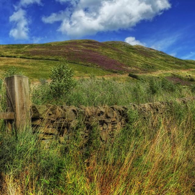 """Summer Scottish Scenery"" stock image"