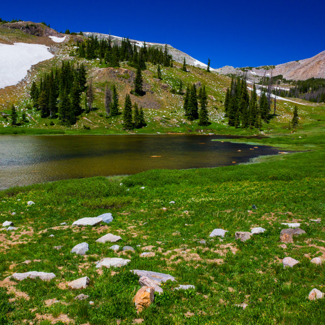 """""""A Wyoming Summer"""" stock image"""