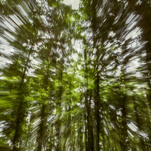 """Moving Forest"" stock image"