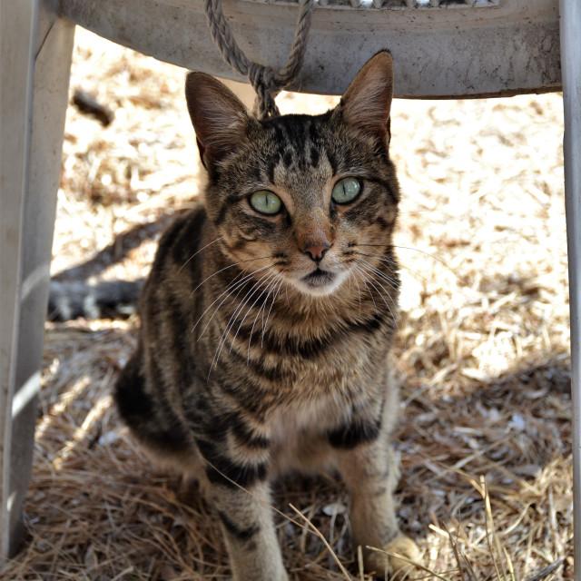 """""""Shady Cat"""" stock image"""