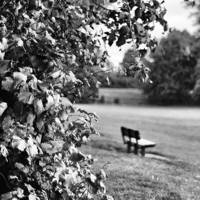 """""""A walk in the park"""" stock image"""