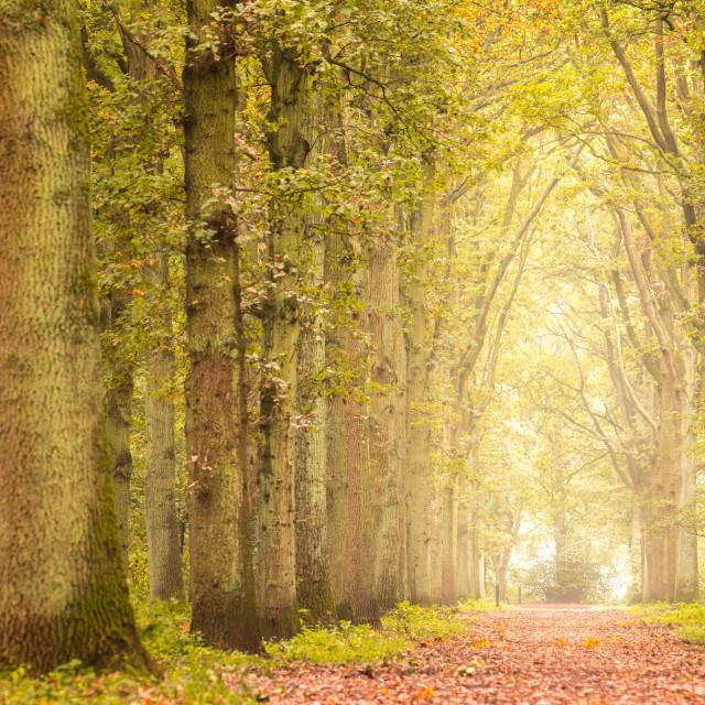 """Allmost Autumn"" stock image"