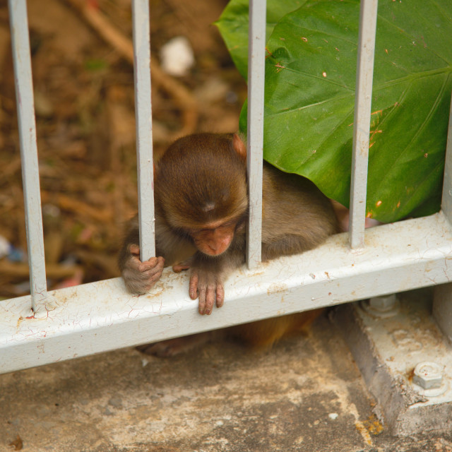 """Monkey Mountain - Behind Bars"" stock image"
