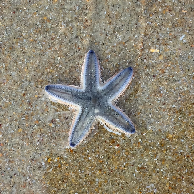 """Starfish"" stock image"