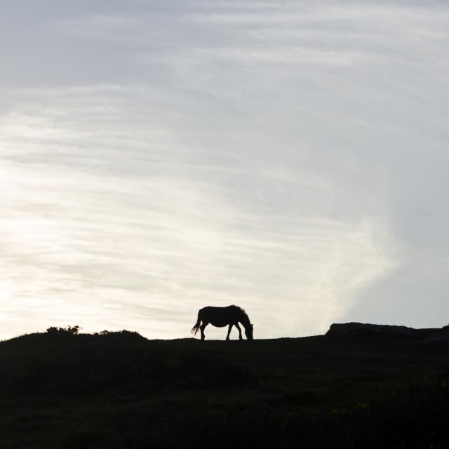 """Dartmoor Silhouette"" stock image"