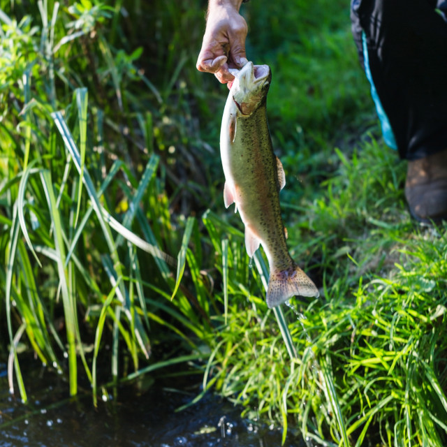 """""""Young adult fishman catched a big trout and holds it in hand"""" stock image"""