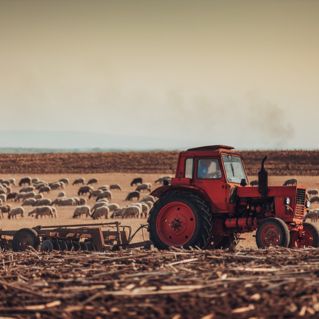 """Farmer in tractor preparing land with seedbed cultivator"" stock image"