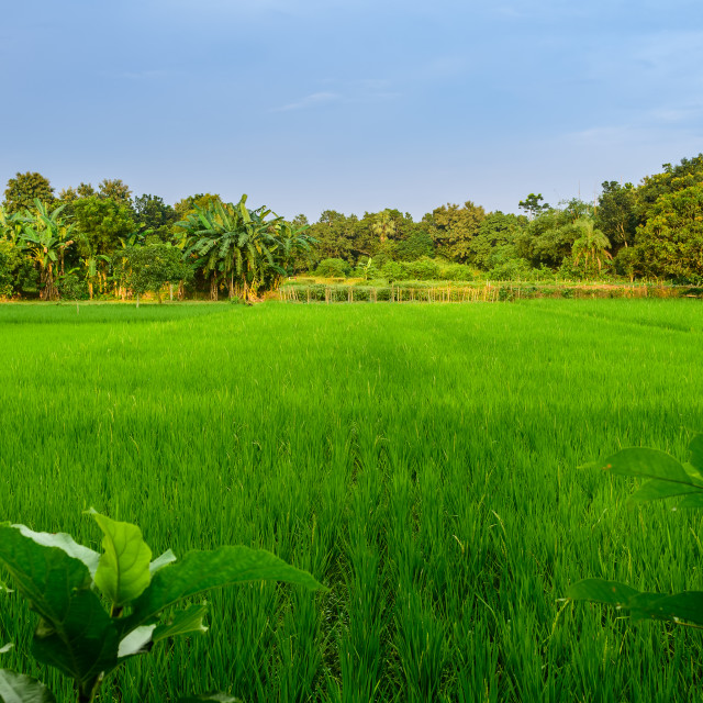 """Typical idyllic landscape of a village of Bengal with copy space"" stock image"