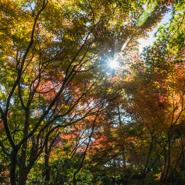 """""""Fall colors"""" stock image"""