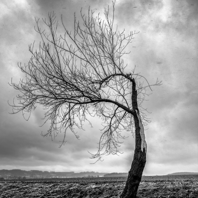 """Broken tree"" stock image"