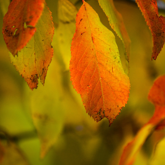 """""""Warmth Of Fall"""" stock image"""