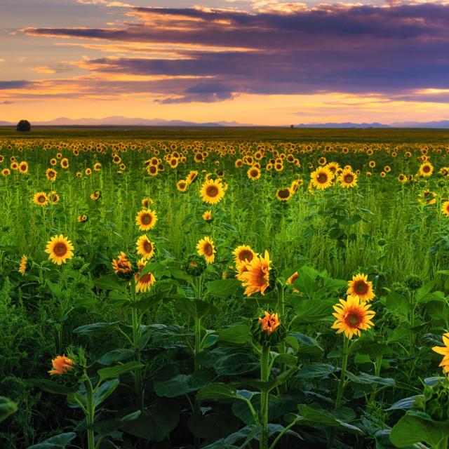 """Western Summer Sunset"" stock image"