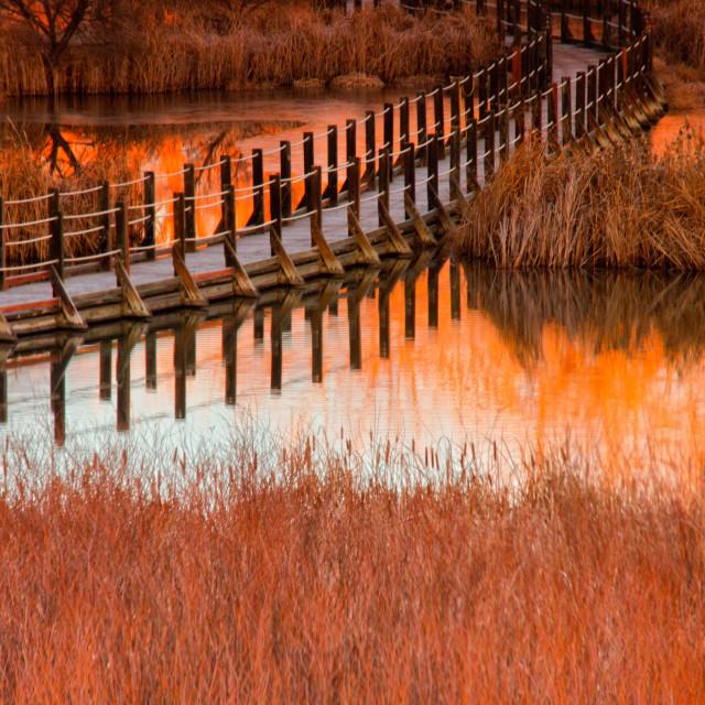 """Wetlands Dawn"" stock image"