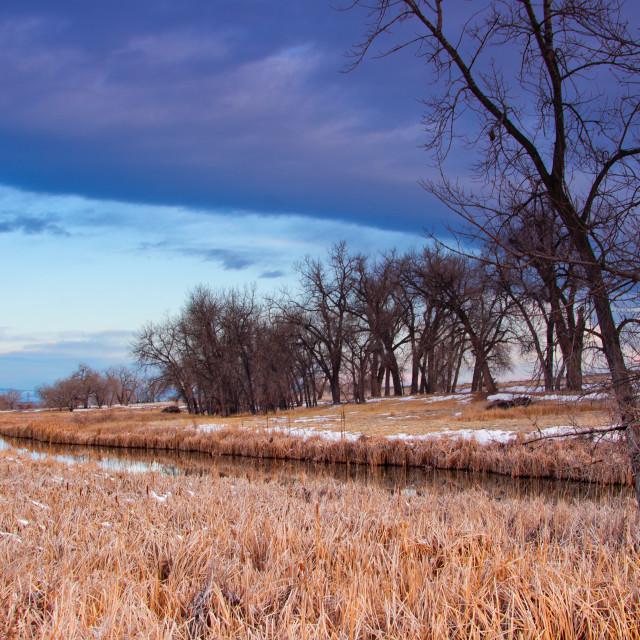 """""""Wetlands Landscape"""" stock image"""