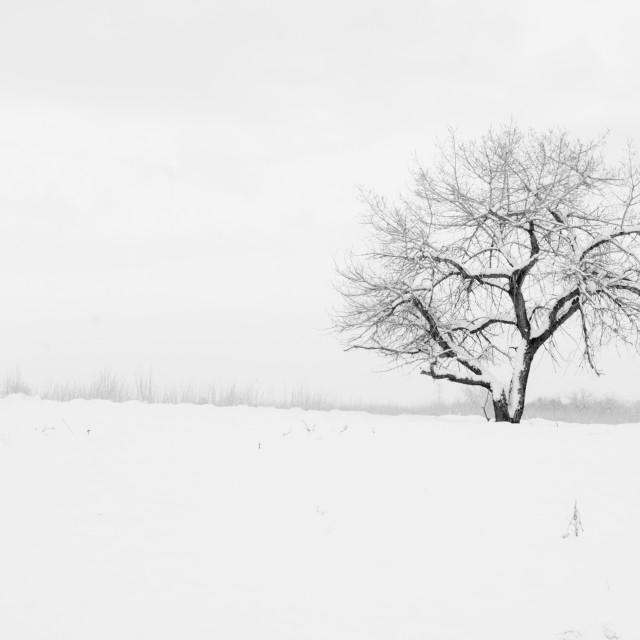 """Winters Guardian"" stock image"