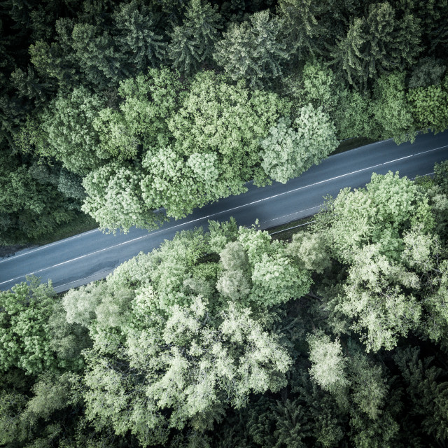 """Straight through the forest"" stock image"