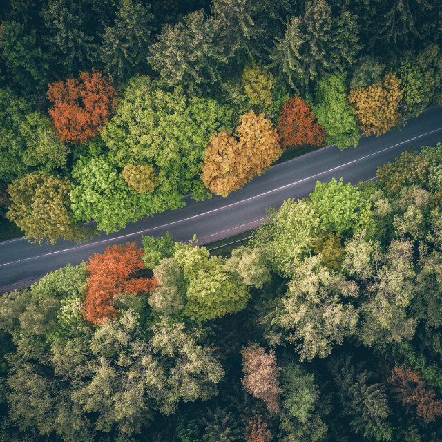 """An autumn coloured forest"" stock image"