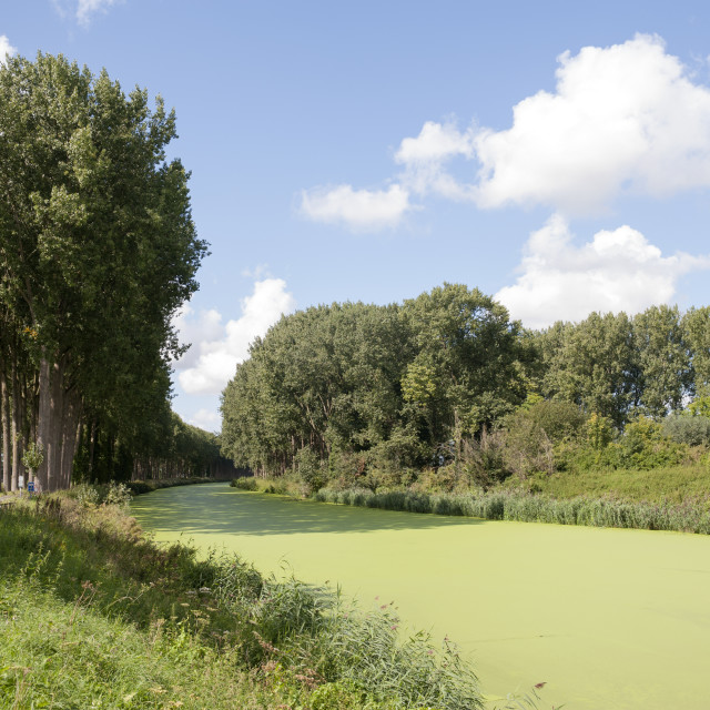 """""""Damme Belgium Damse Vaart Noord canal covered with duckweed (lemna)"""" stock image"""