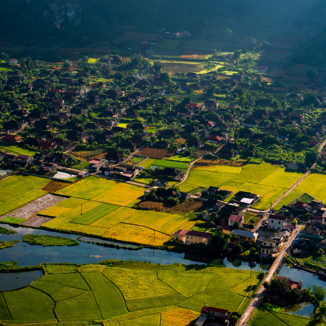 """""""Rice ripe on terraced fields, rice farmers in Lao Cai, North"""" stock image"""