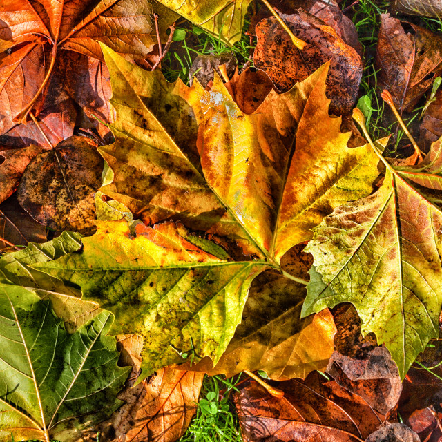 """Autumn leaves background."" stock image"