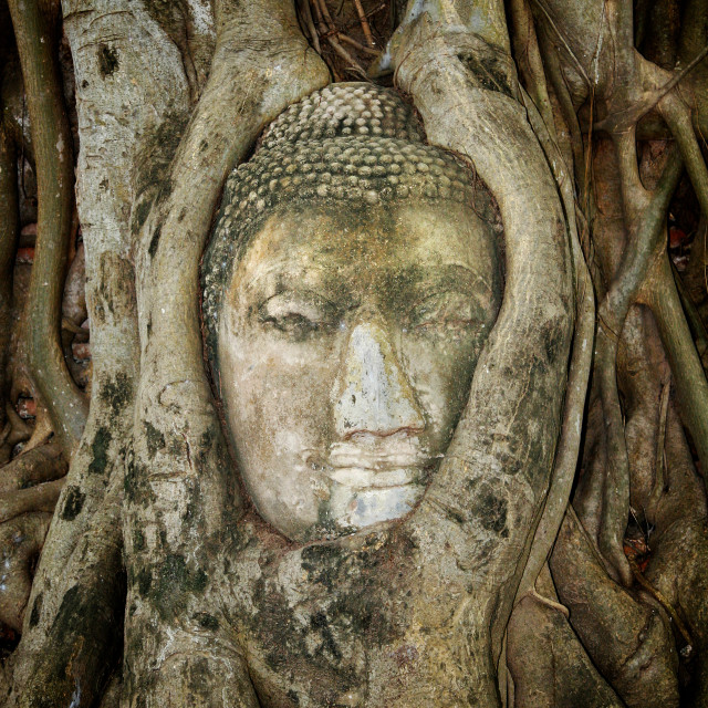 """""""Ancient Buddha Entwined Within Tree Roots in Thailand"""" stock image"""