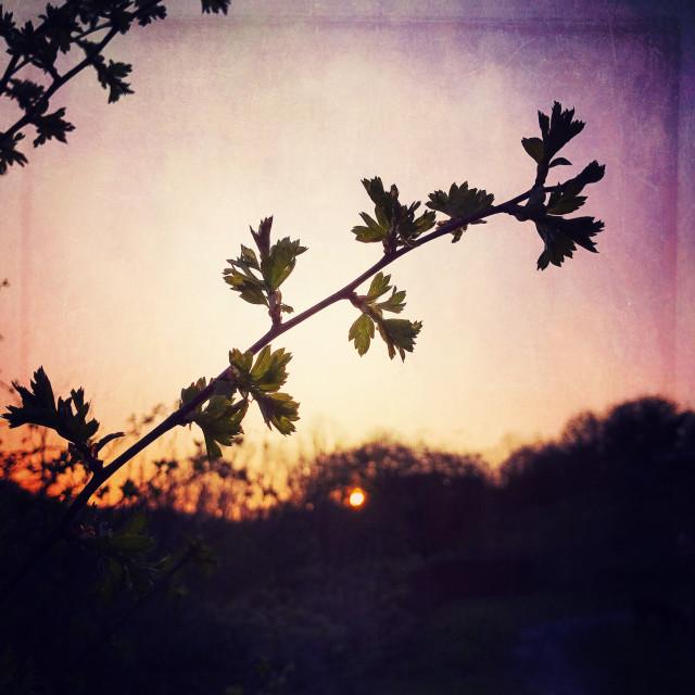 """""""Backlit vegetation at sunset"""" stock image"""