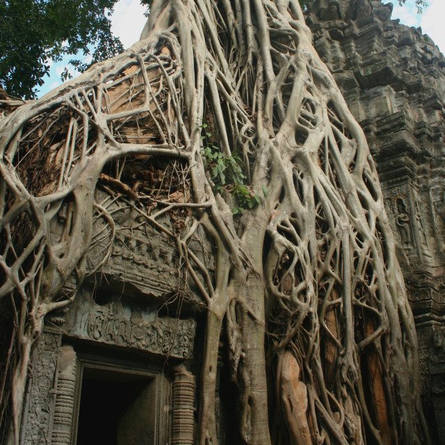 """Tomb Raider gate at the Ta Prohm temple"" stock image"