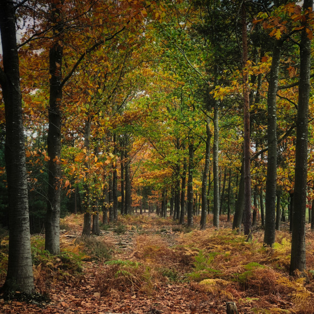 """Autumn Forest"" stock image"