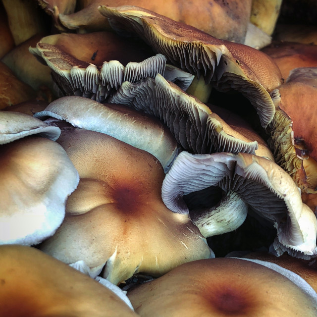 """Autumn Fungi"" stock image"