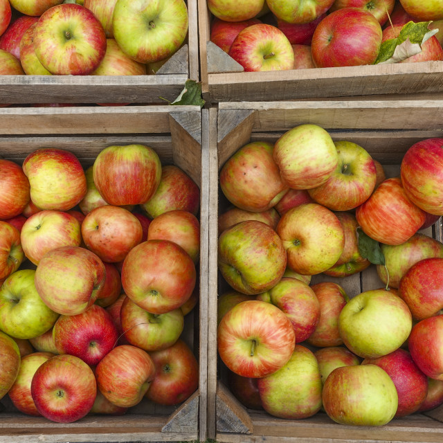 """wooden boxes with apples"" stock image"