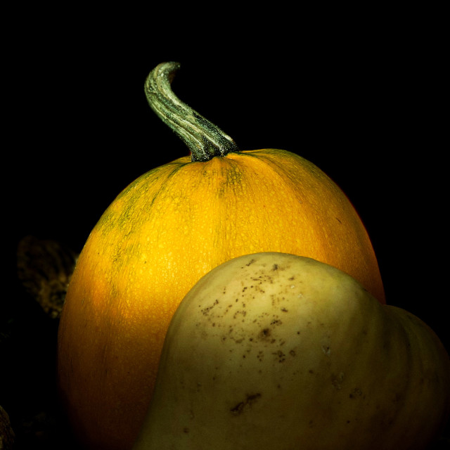 """Squash vegetable still life"" stock image"