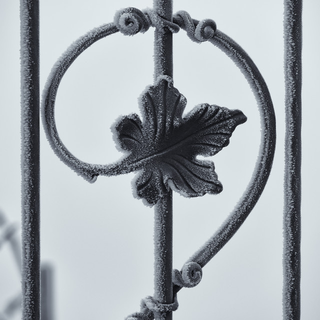 """Frozen ice on wrought iron fence element"" stock image"