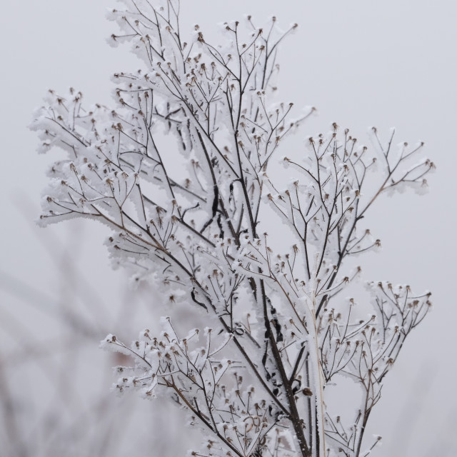 """Frozen branches of a tree"" stock image"