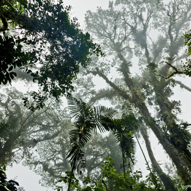 """Cloud Forest 3"" stock image"