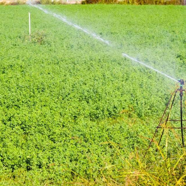 """""""Automatic irrigation of crop fields"""" stock image"""