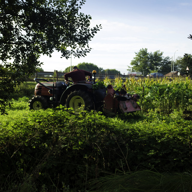 """Farmer on Tractor in a Sweetcorn field."" stock image"