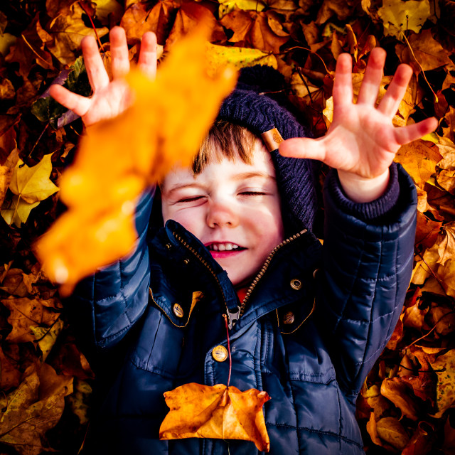 """Fallling leaves"" stock image"