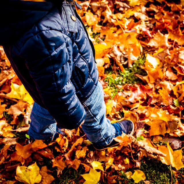 """Walking in leaves"" stock image"