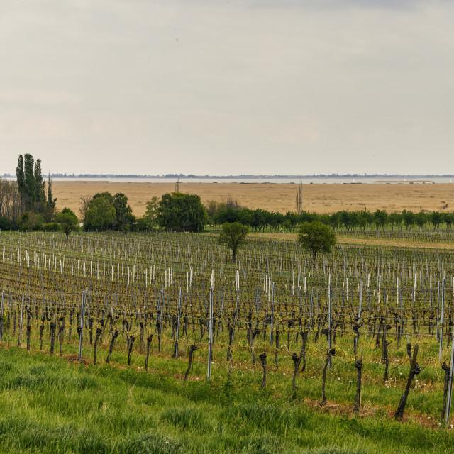 """""""Panorama Burgenland Neusiedlersee"""" stock image"""